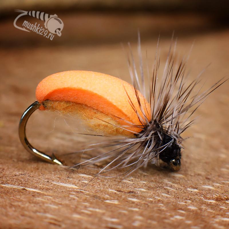 Dry Carrot beetle