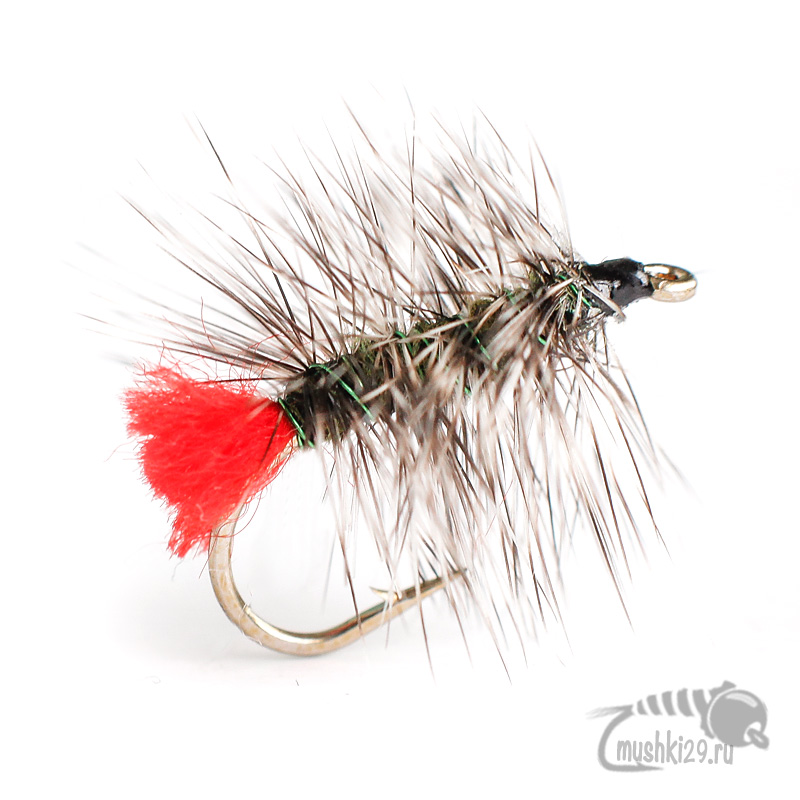 Griffith\'s Gnat (v. Tail Red)