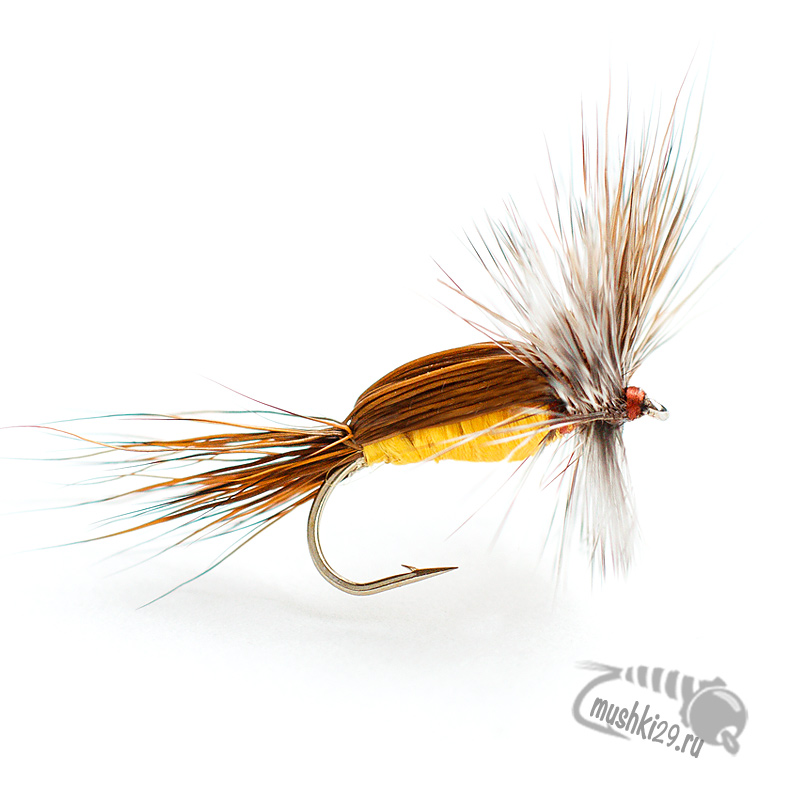 Humpy Brown back