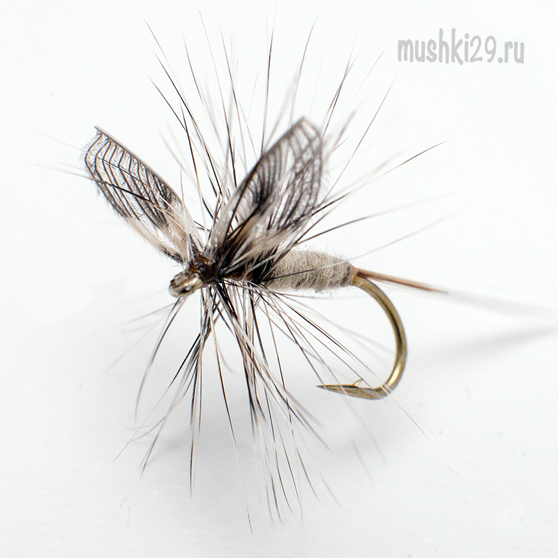 Grey Quill (Mayfly)